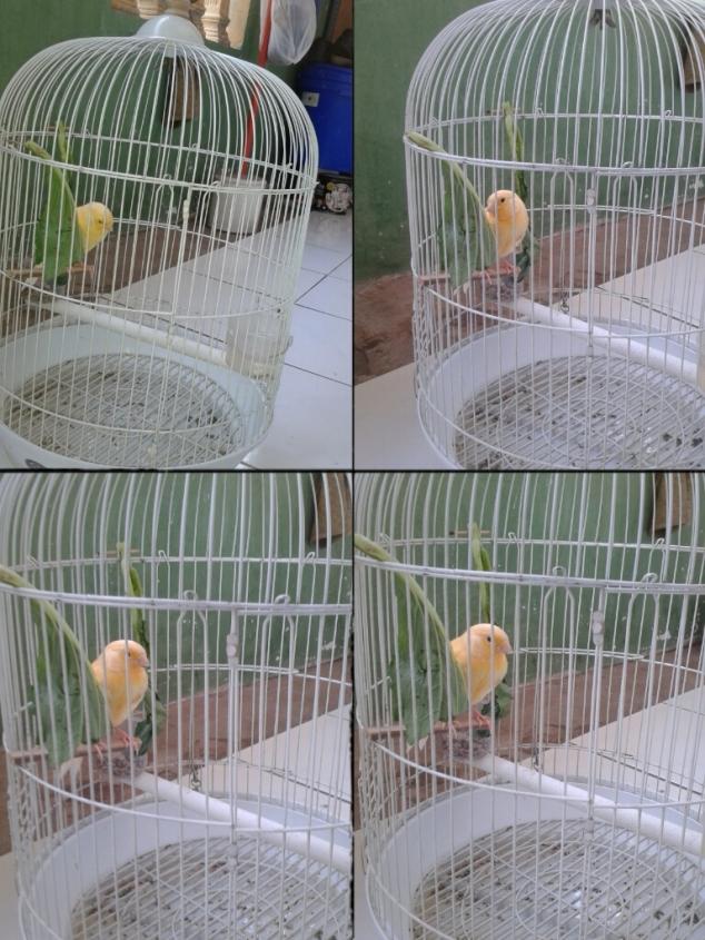Si kuning